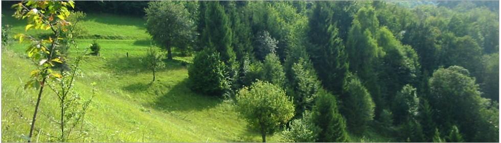 Javorska zelišča